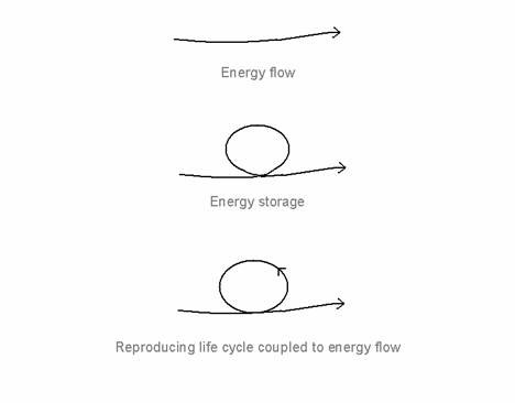 Figure 1. Energy flow, energy storage and the reproducing life-cycle