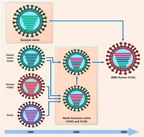 Origin of  the 2009 pandemic virus