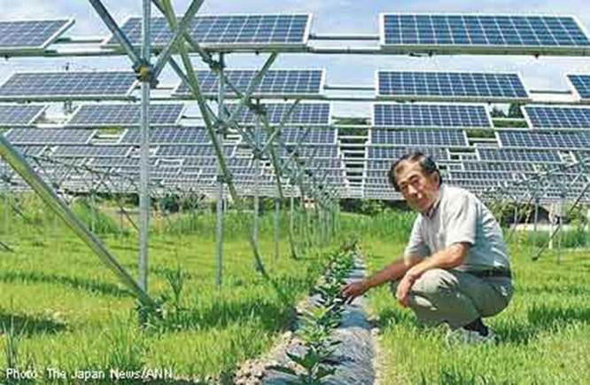 Japanese Farmers Producing Crops And Solar Energy